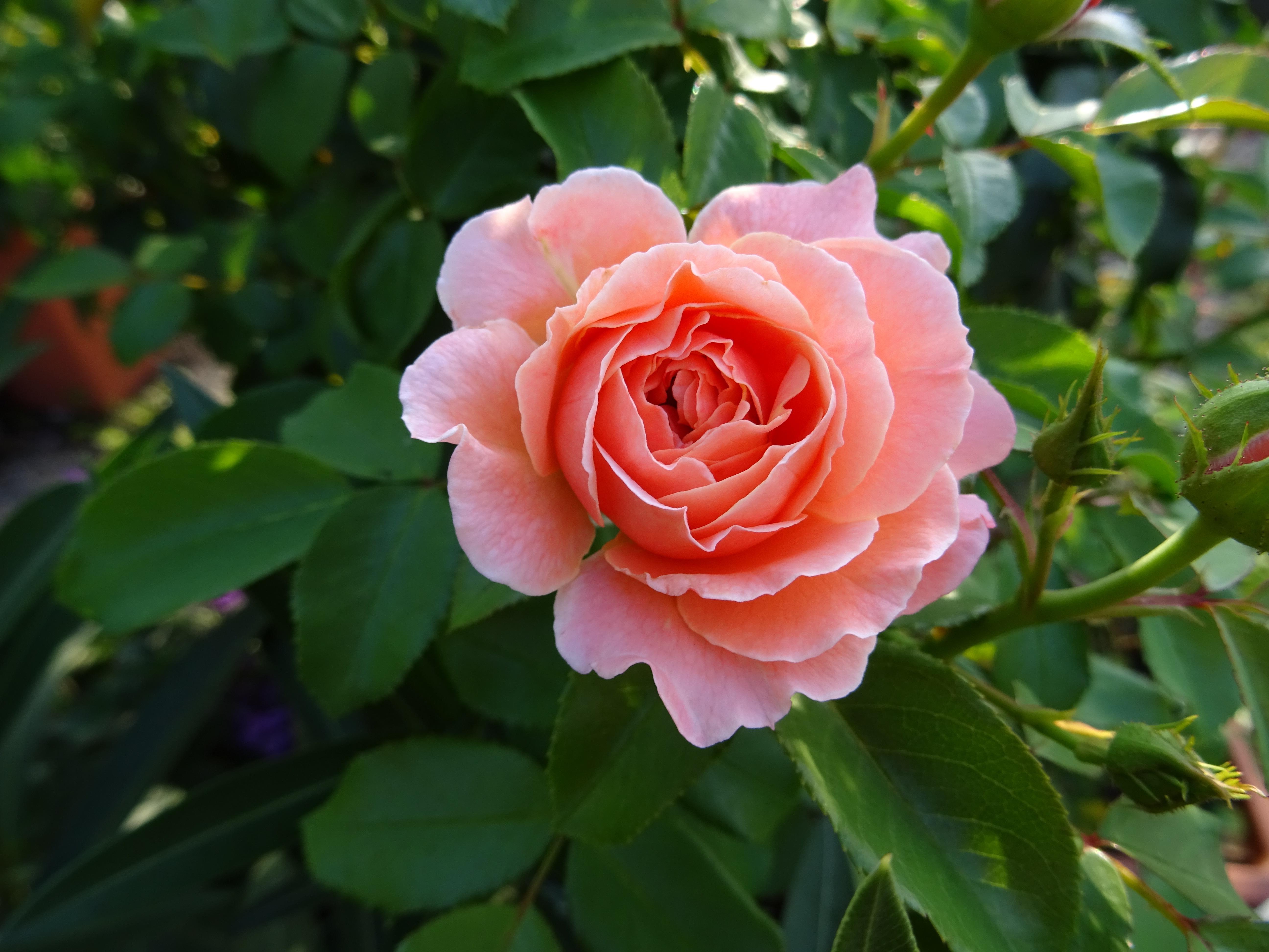 Beet-Rose Marie Curie